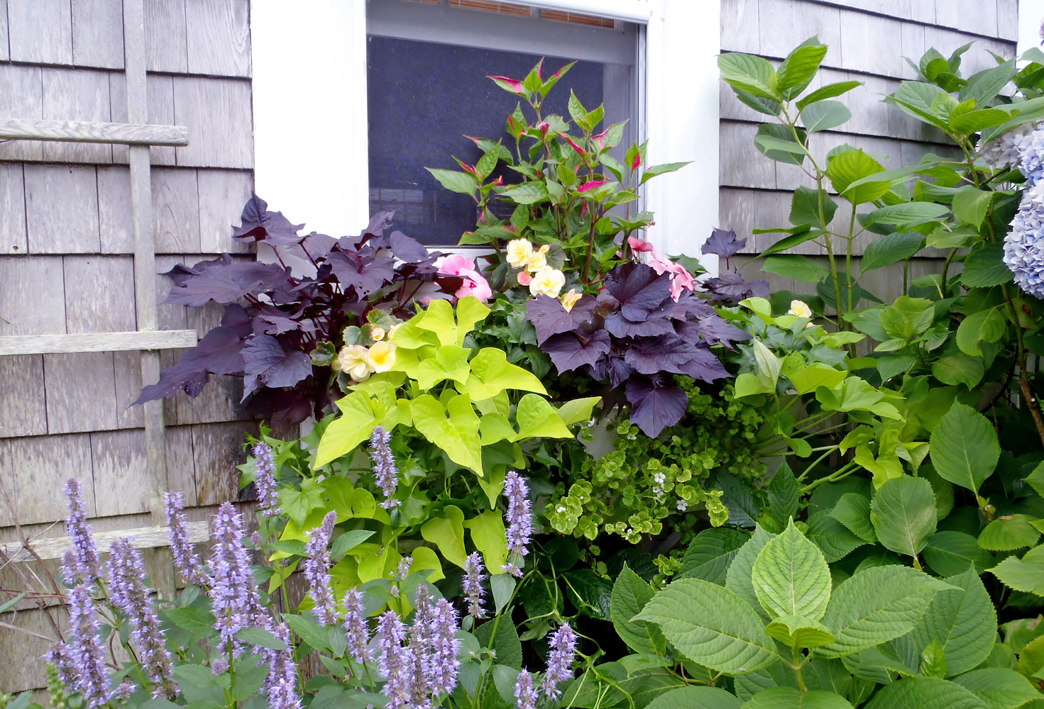 Nantucket Window Box and Garden