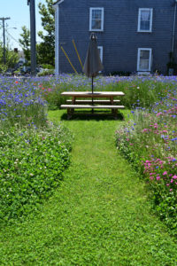Nantucket Meadow