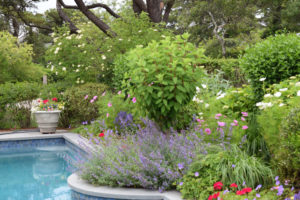 Nantucket Pool Garden
