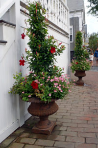 Container Gardening Nantucket